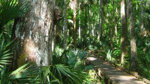 Bear Swamp Trail