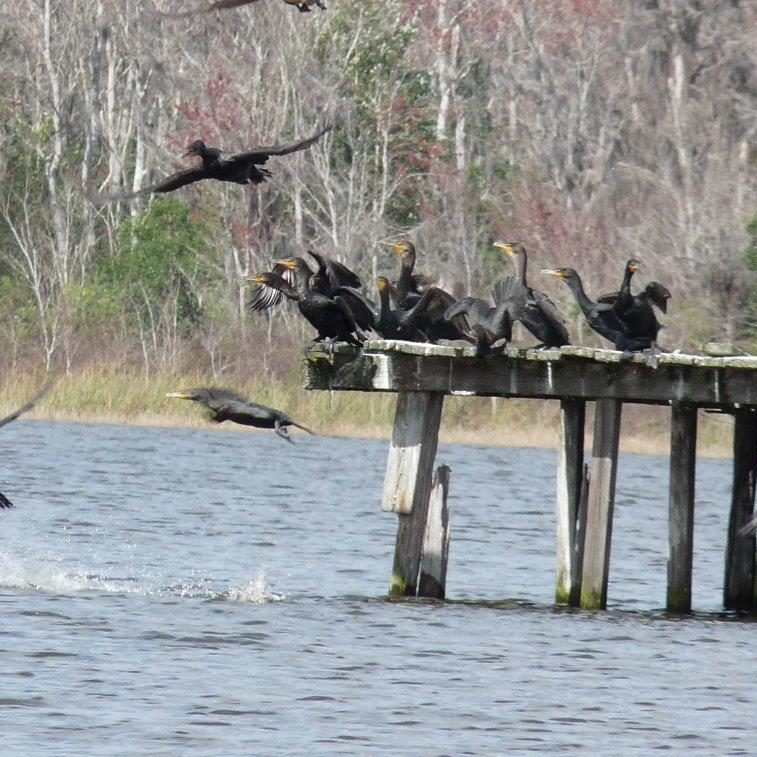 Lake Bryant Resort for waterfront RV Lots and Mobile homes